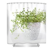 Thymes  Shower Curtain