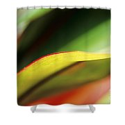 Ti-leaf Abstract Shower Curtain