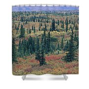 Tiaga Fall Colors, Tundra And Spruce Shower Curtain