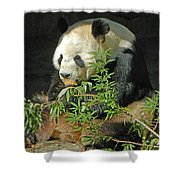 Tian Tian Hanging Out In Panda Man Cave Shower Curtain