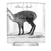 Tibetan Musk Deer Shower Curtain