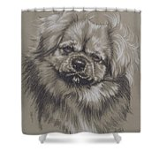 Tibetan Spaniel Shower Curtain