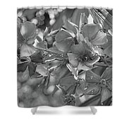 Tibouchina In Black And White Shower Curtain