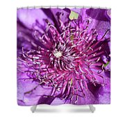 Tickled Purple Shower Curtain