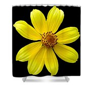 Tickseed Sunflower Shower Curtain