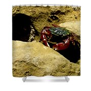 Tide Pool Crab 1 Shower Curtain