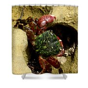 Tide Pool Crab 2 Shower Curtain