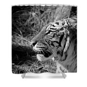Tiger 2 Bw Shower Curtain