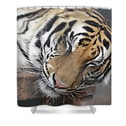 Tiger 2 Shower Curtain