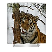 Tiger 3 Shower Curtain by Ernie Echols