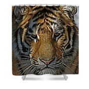 Tiger 5 Posterized Shower Curtain