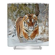 Tiger Attack Shower Curtain