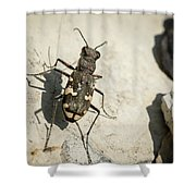 Tiger Beetle Looking For Prey On A Stone Shower Curtain
