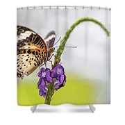 Tiger Butterfly Perched On A Flower Shower Curtain