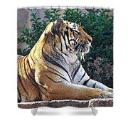 Tiger Shower Curtain