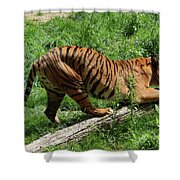Tiger Clawed Shower Curtain