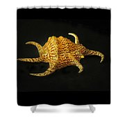 Tiger Conch Seashell Shower Curtain
