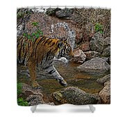 Tiger Crossing Poster Shower Curtain