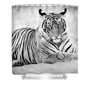 Tiger Cub At Rest Shower Curtain