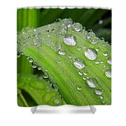 Tiger Drops Shower Curtain