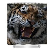 Tiger Faces 2 Shower Curtain