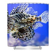 Tiger Fish Shower Curtain