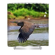Tiger Heron Shower Curtain