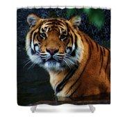 Tiger Land Shower Curtain