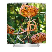 Tiger Lilies Art Prints Canvas Summer Tiger Lily Flowers Shower Curtain