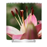 Tiger Lilly Shower Curtain