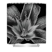 Tiger Lily - Black And White Shower Curtain