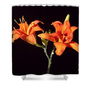 Tiger Lily Flower Opening Part Shower Curtain
