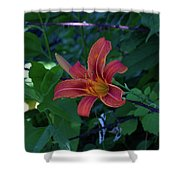 Tiger Lily In June 2018 Shower Curtain