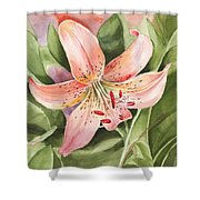 Tiger Lily Watercolor By Irina Sztukowski Shower Curtain