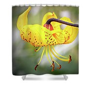 Tiger Lily. Shower Curtain