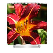 Tiger Lily0064 Shower Curtain