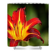 Tiger Lily0078 Shower Curtain