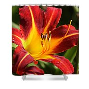Tiger Lily0170 Shower Curtain