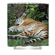 Tiger- Lincoln Park Zoo Shower Curtain