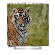 Tiger Look Shower Curtain