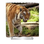Tiger On The Hunt Shower Curtain
