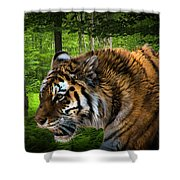 Tiger On The Prowl Shower Curtain