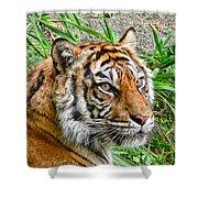 Tiger Portrait Shower Curtain by Jennie Marie Schell