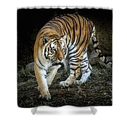 Tiger Stripes Memphis Zoo Shower Curtain