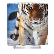 Tiger Strut Shower Curtain