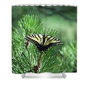 Tiger Swallow Tail Shower Curtain