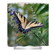 Tiger Swallowtail 1 Shower Curtain
