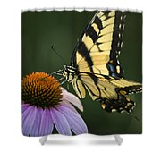 Tiger Swallowtail 1 Shower Curtain
