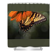 Tiger Swallowtail - 2 Shower Curtain