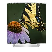 Tiger Swallowtail 2 Shower Curtain